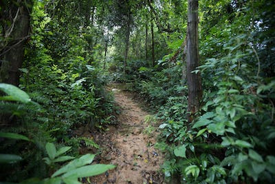 Trail in asian forest