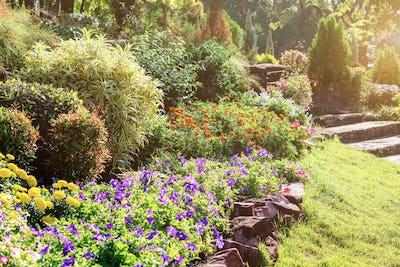 Flower with sunlight in garden