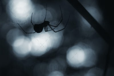 Halloween scene with spider on web