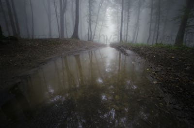 Lake in surreal forest with fog