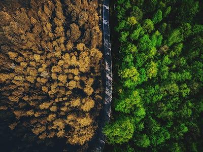 Half autumn half summer forest top down view