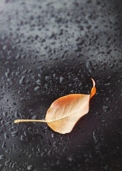One yellow fallen leaf on wet dark background