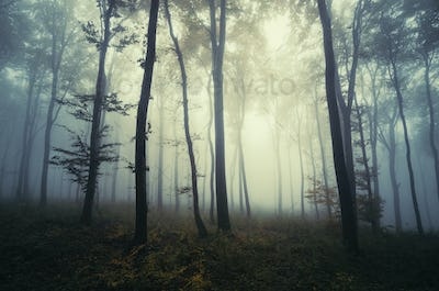 Surreal dark Transylvanian forest on Halloween