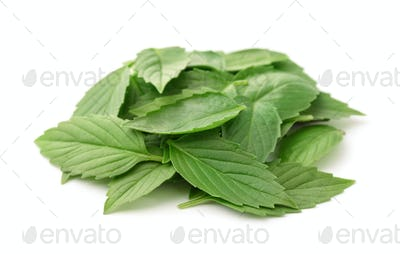Heap of fresh basil leaves