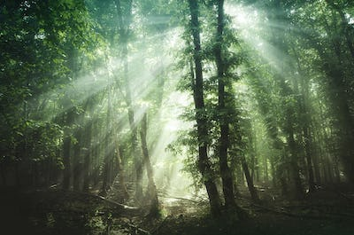 Magical sun rays in the woods