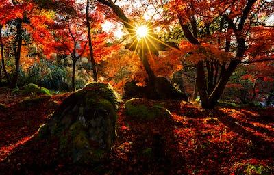 Silhouette of autumn leaf with sun flare in Eikando temple, Kyoto, Japan