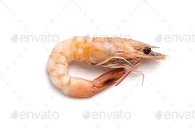 Whole boiled shrimp close-up. Isolated on white background.