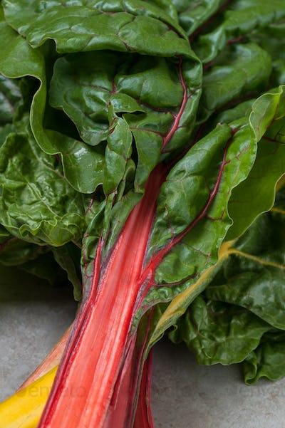 Fresh leaves of chard (salad chard) close-up.