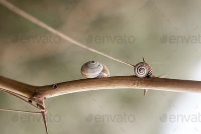 Little and Cute Snails