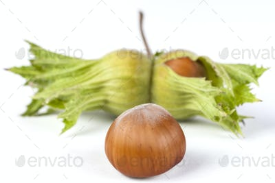 Hazelnut with Green