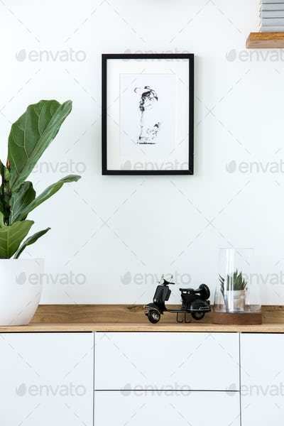 Plant on wooden white cupboard in simple living room interior wi