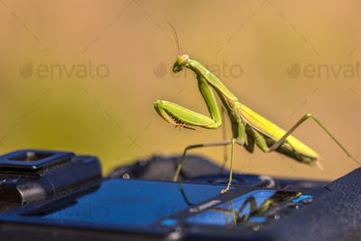 Praying Mantis on camera