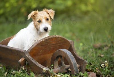 Smart cute puppy dog sitting in the garden
