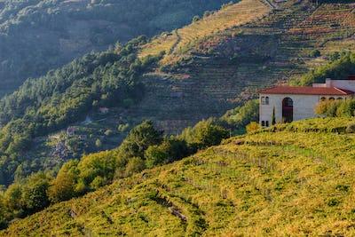 Vineyards and winery of Abadia da Cova