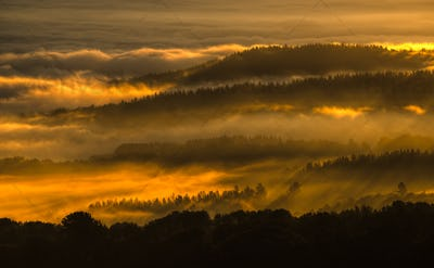 Fog gilded by the sun's rays of dawn