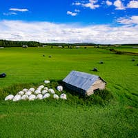 Aerial view of round straw bales in black plastic in green field in rural Finland.