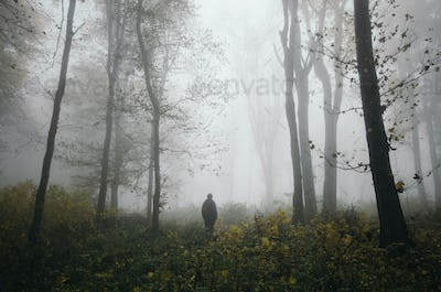 Walk in foggy autumn woods