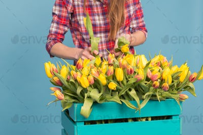 Wooden box with tulips and gardener's hands on blue background