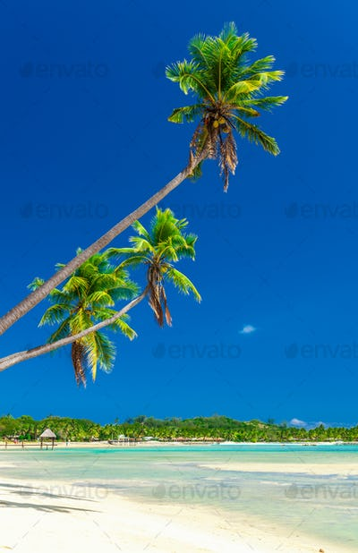 Tropical beach with coconut palm trees and clear lagoon, Fiji Is