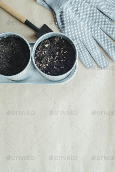 planting seeds of parsley, dill, basil