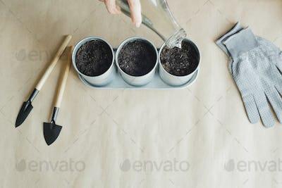 woman planting seeds in metal pots