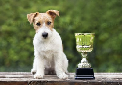 Champion dog concept - jack russell dog sitting near a winner cup