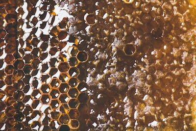 Natural bee honeycomb texture, wallpaper and background
