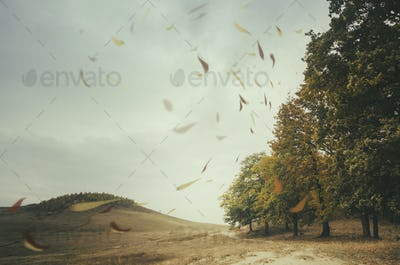 autumn landscape with leaves floating in the wind at the edge of