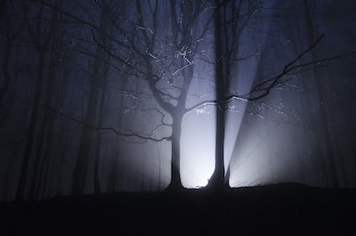 Light rays forest at night