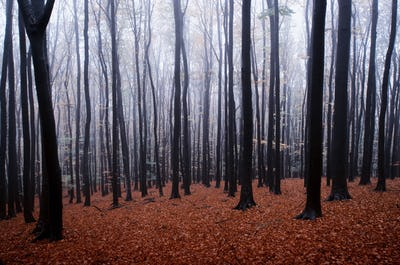 Autumn in the forest with mist