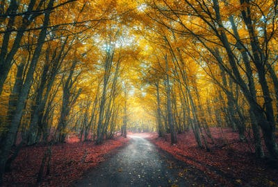 Amazing autumn forest with empty road in fog in the morning
