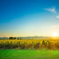 Bolgheri and Castagneto vineyards sunrise backlight. Maremma Tus