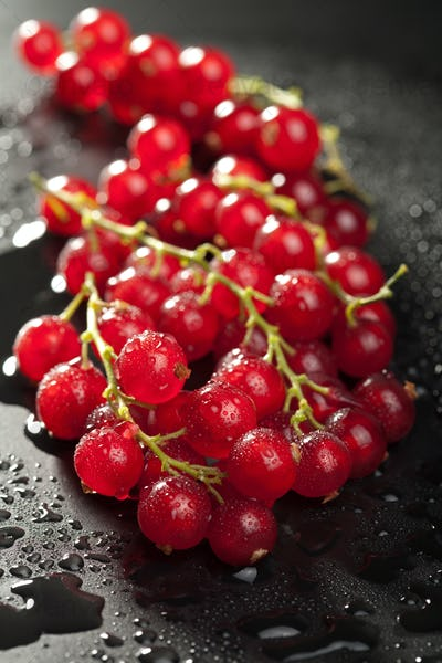 redcurrant with water drops over black