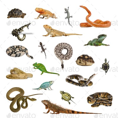Large collection of reptile, pet and exotic, in different position
