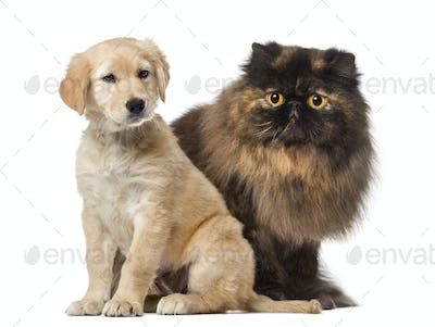 Dog and cat sitting, isolated on white