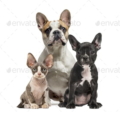 Three dogs sitting and facing the camera, isolated on white