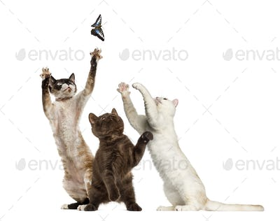 Cats trying to catch a butterfly, isolated on white