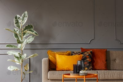 Ficus next to brown sofa with orange pillows in grey living room