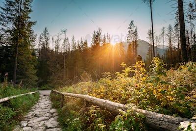 Tatra National Park, Poland. Sunrise Above Hiking Trails In Summ