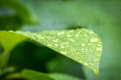 Green leaf with water drop-3