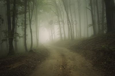 Road through the haunted mysterious woods with fog