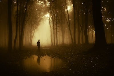 Dark silhouette on edge of lake in mysterious forest with fog