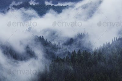 twilight landscapw with fog above forest