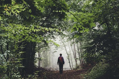 man hiking on misty forest path with green foliage and lush vege