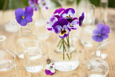 pansy flowers in chemical glassware, table decoration in garden