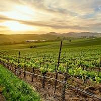 Vineyards at sunset in California, USA