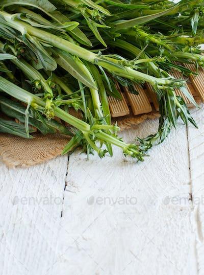 Fresh raw italian chicory, Puntarelle