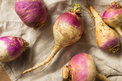 Raw Organic Purple and White Turnips