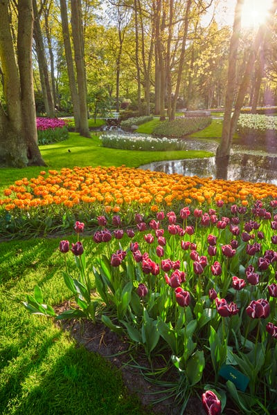 Keukenhof flower garden. Lisse, the Netherlands.