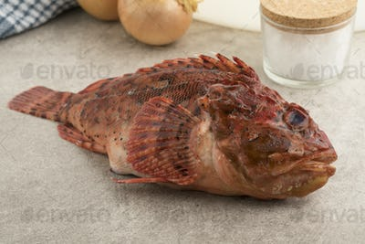 Fresh raw red scorpionfish